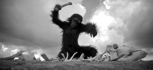 04_scimmia